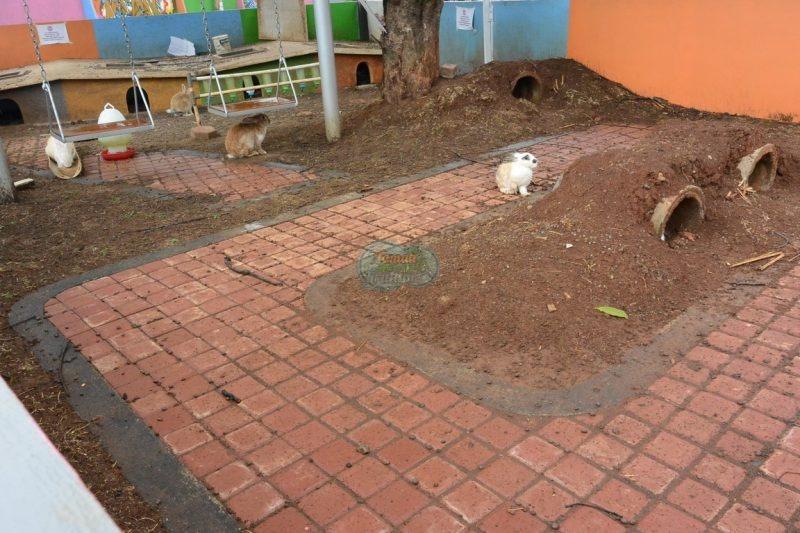 Rumah kelinci - Taman Pemuda Pratama (3)